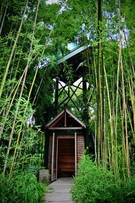 Bamboo Tower