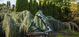 Image of Weeping Blue Atlas Cedar