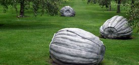 Image of John Ruppert's 'Pumpkins'
